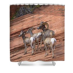 Big Horn Sheep, Zion National Park Shower Curtain
