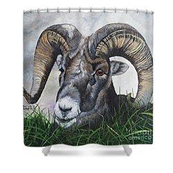 Big Horned Sheep Shower Curtain