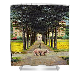 Big Pig - Pistoia -tuscany Shower Curtain by Trevor Neal