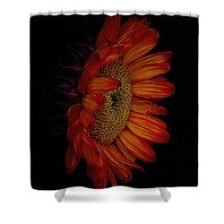 Big Red Shower Curtain by Dennis Reagan