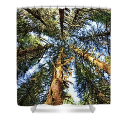 Big Trees In Olympic National Park Shower Curtain