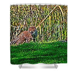 Big Yawn By Little Cub Shower Curtain by Miroslava Jurcik