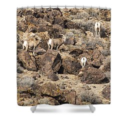 Shower Curtain featuring the photograph Bighorn Camouflage  by Janis Knight