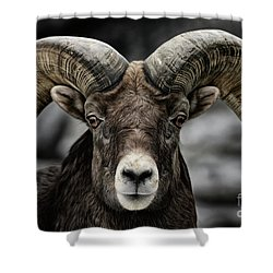 Bighorn Ram Shower Curtain by Brad Allen Fine Art