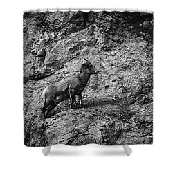 Bighorn Sheep Ewe On Wolf Creek Pass Shower Curtain