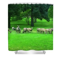 Shower Curtain featuring the digital art Bighorn Sheep Ewes  by Chris Flees