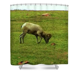 Shower Curtain featuring the digital art Bighorn Sheep Grazing by Chris Flees