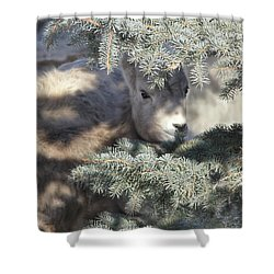 Shower Curtain featuring the photograph Bighorn Sheep Lamb's Hiding Place by Jennie Marie Schell