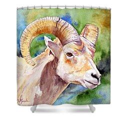 Bighorn Sheep Portrait Shower Curtain