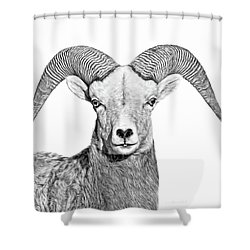 Shower Curtain featuring the photograph Bighorn Sheep Ram Black And White by Jennie Marie Schell
