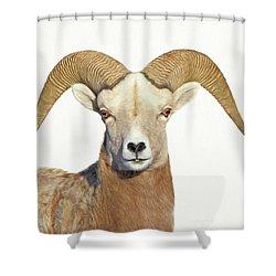 Shower Curtain featuring the photograph Bighorn Sheep Ram by Jennie Marie Schell