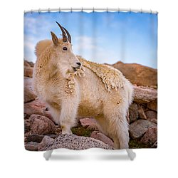 Billy Goat's Scruff Shower Curtain by Darren White