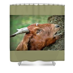 Shower Curtain featuring the photograph Billy by Marion Johnson