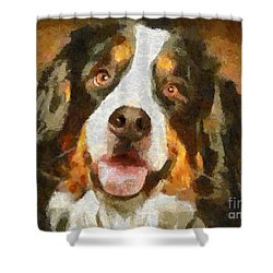 Shower Curtain featuring the painting Bimbo - Bernese Mountain Dog by Dragica  Micki Fortuna