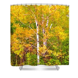 Birch Afire  Shower Curtain by Susan Crossman Buscho