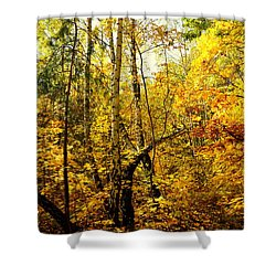 Birch Autumn Shower Curtain
