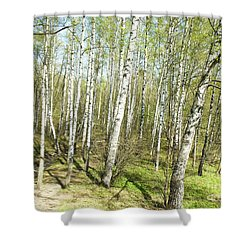 Birch Forest In Spring Shower Curtain by Irina Afonskaya