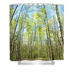 Birch Forest Spring Shower Curtain by Irina Afonskaya