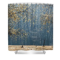 Birch Forest To The Morning Sun Shower Curtain
