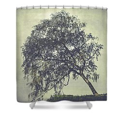 Shower Curtain featuring the photograph Birch In The Mist by Ari Salmela