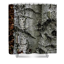 Shower Curtain featuring the photograph Birch by Kenneth Campbell