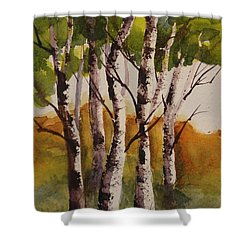 Birch Shower Curtain by Marilyn Jacobson