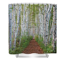 Birch Path Shower Curtain
