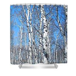 Birch Sky Shower Curtain