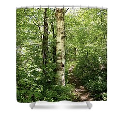 Birch Tree Hiking Trail Shower Curtain