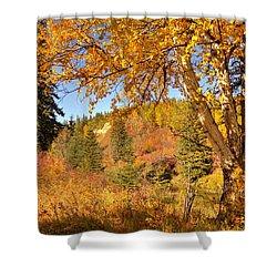 Birch Tree In Autumn Shower Curtain by Jim Sauchyn