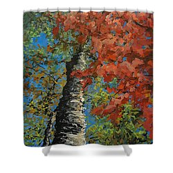 Birch Tree - Minister's Island Shower Curtain