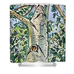 Birch Tree Sketchbook Project Down My Street Shower Curtain by Irina Sztukowski