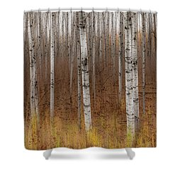Birch Trees Abstract #2 Shower Curtain