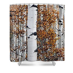 Birch Trees Abstract Shower Curtain