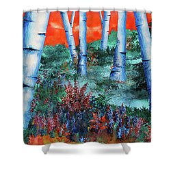 Birch Trees At Sunset Shower Curtain by Curtiss Shaffer