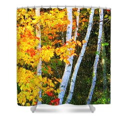 Birch Trees Shower Curtain by Verena Matthew