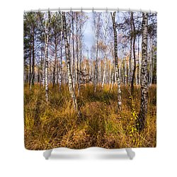 Birches And Grass Shower Curtain