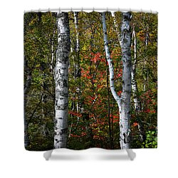 Shower Curtain featuring the photograph Birches by Elena Elisseeva