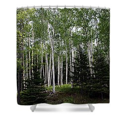 Birches Shower Curtain