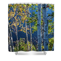 Shower Curtain featuring the photograph Birches On Lake Shore by Elena Elisseeva