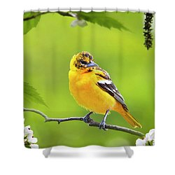 Bird And Blooms - Baltimore Oriole Shower Curtain by Christina Rollo