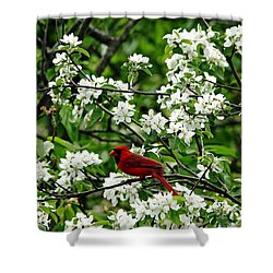 Bird And Blossoms Shower Curtain