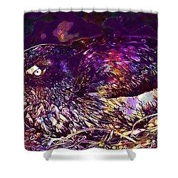 Bird Cassins Auklet Crested Birds  Shower Curtain