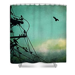 Shower Curtain featuring the photograph Bird City Revisited by Trish Mistric