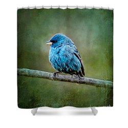 Bird In Blue Indigo Bunting Ginkelmier Inspired Shower Curtain