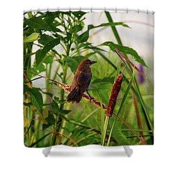 Bird In Cattails Shower Curtain