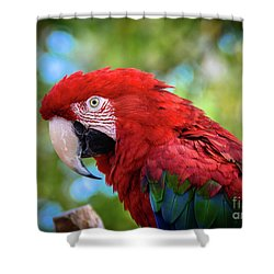 Shower Curtain featuring the photograph Bird In Red by Lisa L Silva