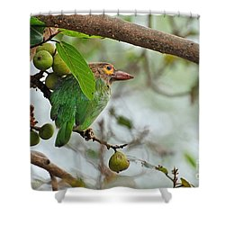 Shower Curtain featuring the photograph Bird In The Bush by Pravine Chester