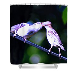 Bird Kiss Shower Curtain by Bill Cannon