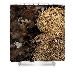 Bird Nest And Feathers Shower Curtain